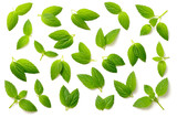 collection of fresh peppermint leaves isolated on white, top view - 204918957
