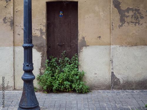 Dom z roślinami na drzwiach.