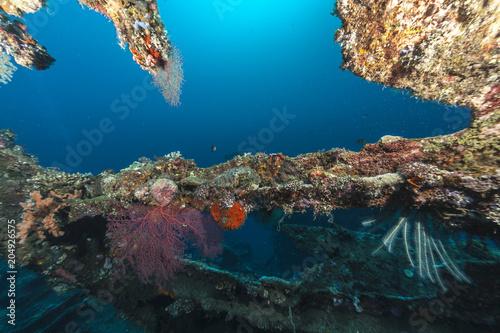 Plexiglas Bali Coral reef off coast of Bali