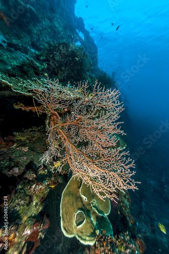 Fotobehang Schipbreuk Coral reef off coast of Bali