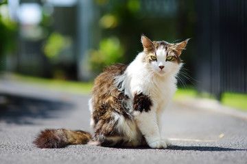 Beautiful fluffy cat outdoors on sunny summer day