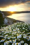 Blumenmeer am Meer