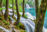 Trees with moss and waterfall at Plitvice lakes nature reserve