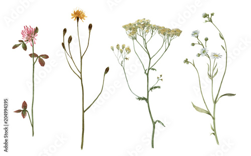 Set of watercolor plants isolated on white. - 204994395