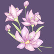 Flower branch and leaves. Hand drawn violet. Vector - 205009936