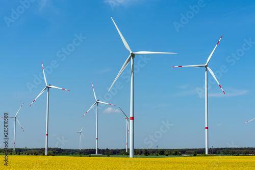 Fototapeta Wind power plants in a flowering rapeseed field seen in rural Germany