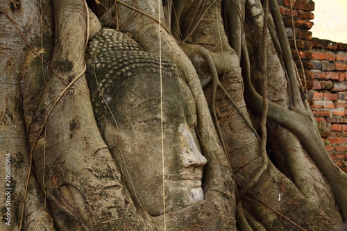 Plexiglas Boeddha Head of Buddha statue in the tree roots at Wat Mahathat of a Buddhist temple in the city of Ayutthaya Historical Park, UNESCO World Heritage,Thailand.
