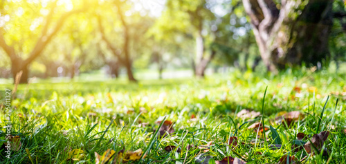 Fotobehang Zwavel geel Summer blur bokeh background