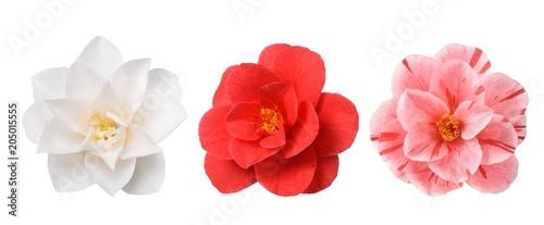 Fridge magnet White Camellia Flower