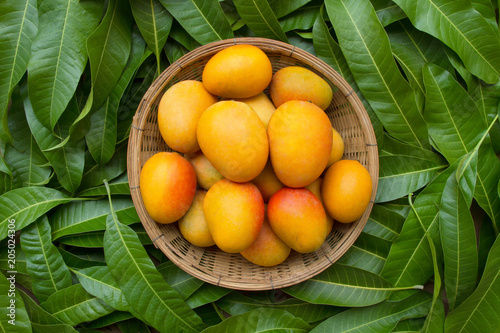 Mango tropical fruit in wooden basket put on green leaf background, top view - 205024306