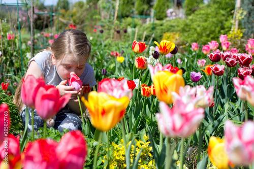 Fototapeta cute child smelling tulip in a beautiful garden