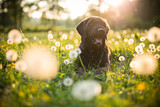 Portrait of black mutt dog during sunset on meadow.