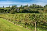 Italian Vineyards - Valpolicella Wine - Verona - 205082312