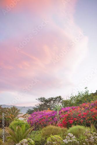 Plexiglas Konrad B. Beautiful, fragrant garden blloming in a spring