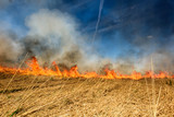 Global Warming. Burning agricultural field, smoke pollution. - 205126128