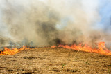 Global Warming. Burning agricultural field, smoke pollution. - 205126168