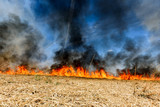 Global Warming. Burning agricultural field, smoke pollution. - 205126304