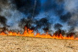 Global Warming. Burning agricultural field, smoke pollution. - 205126352
