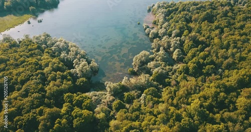 Wall mural Forest and lake
