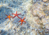 group of sea stars on the bottom of the sea - 205129588