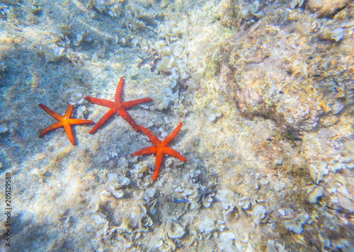 group of sea stars on the bottom of the sea