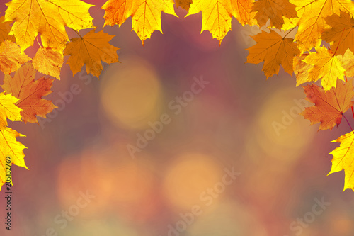 Colorful fall season leaves on blurry bokeh copy space background. Selective focus used. - 205132769