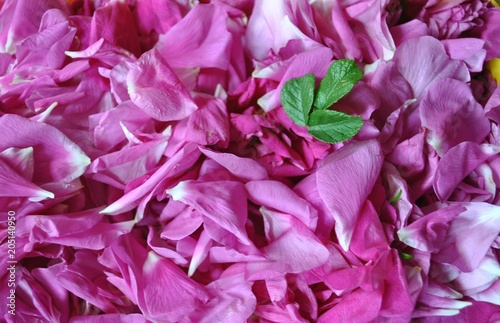 Foto Murales Płatki róży