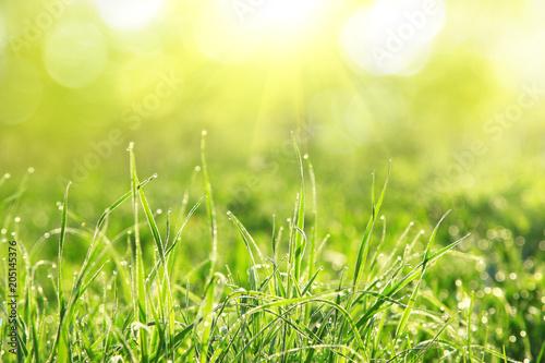 Gras im Frühling - 205145376