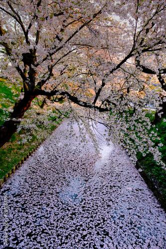 Fotobehang Lavendel 弘前城のお堀と桜