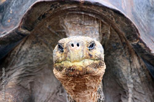 Aluminium Schildpad Riesen Schildkröten auf den Galapagos Inseln