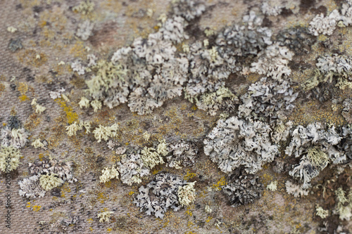 Canvas Stenen Multicolored moss, close-up, texture, background, close-up