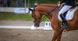 Horse brown (fox) with rider in the dressage course, in the gait step, taken in the clipping from the side.