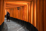 Gates tunnel in Fushimi inari shrine - 205198793