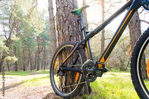 Fotobehang Zwavel geel Mountain Bike on Summer Trail in the Beautiful Pine Forest Lit by the Sun. Adventure and Cycling Concept.