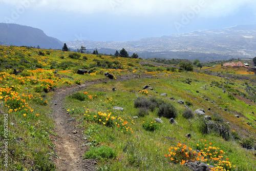Canvas Canarische Eilanden Spain, Canary Islands, Landscape