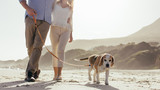 Couple walking their pet dog on beach