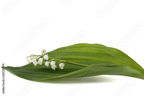 Foto Spatwand Lelietjes van dalen White flower of lily of the valley, lat. Convallaria majalis, isolated on white