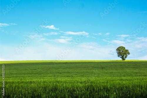 Fotobehang Toscane Cielo azzurro sulla Maremma