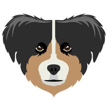 Australian Shepherd Avatar Sticker