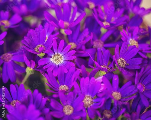 Fridge magnet Purple Flowers in Garden  macro  details