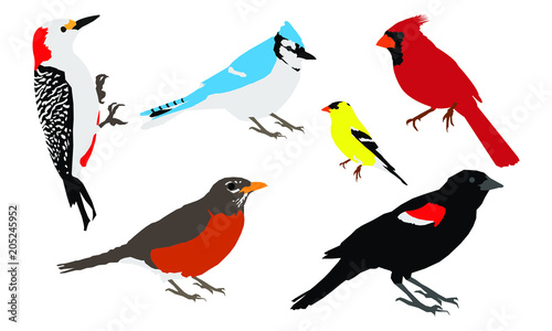Common Backyard Birds Vector - Common Backyard Birds Vector Buy Photos AP Images DetailView