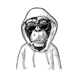Monkey hipster with cigarette dressed in the hoodie. Vintage black engraving