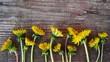 Beautiful dandelions on wooden background.