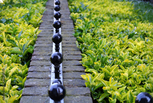 Fotobehang Lavendel hedge and boundary wall