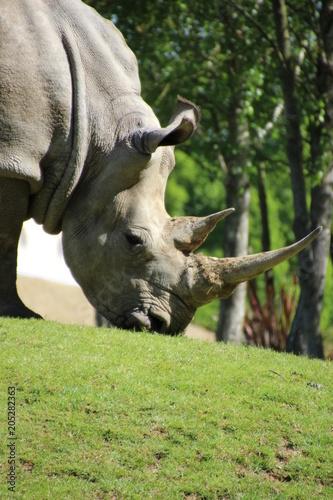 Fotobehang Neushoorn Rhinoceros life