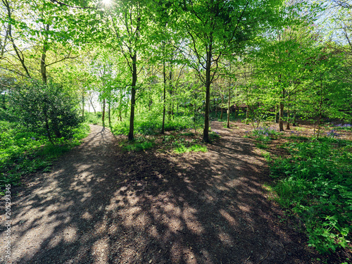 Fotobehang Groene Spring forest park,Northern Ireland