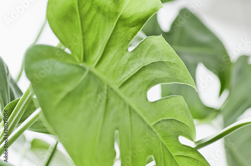 Tropical,botanical nature photo floral elements. monstera, Palm leaves and other. Tropical leaves