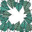 leafs plant frame pattern vector illustration design