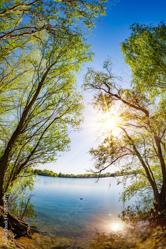 Lake with trees and bright sun on a hot summer day