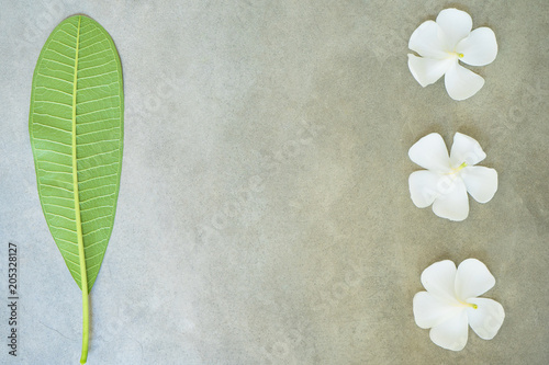 Plexiglas Plumeria Concept composition of spa treatment, close up of white plumeria or frangipani flowers on stone background with copy space.